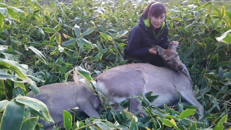 女性ハンターが撃った鹿 解体ショー&鹿肉堪能BBQ、開催いたします。